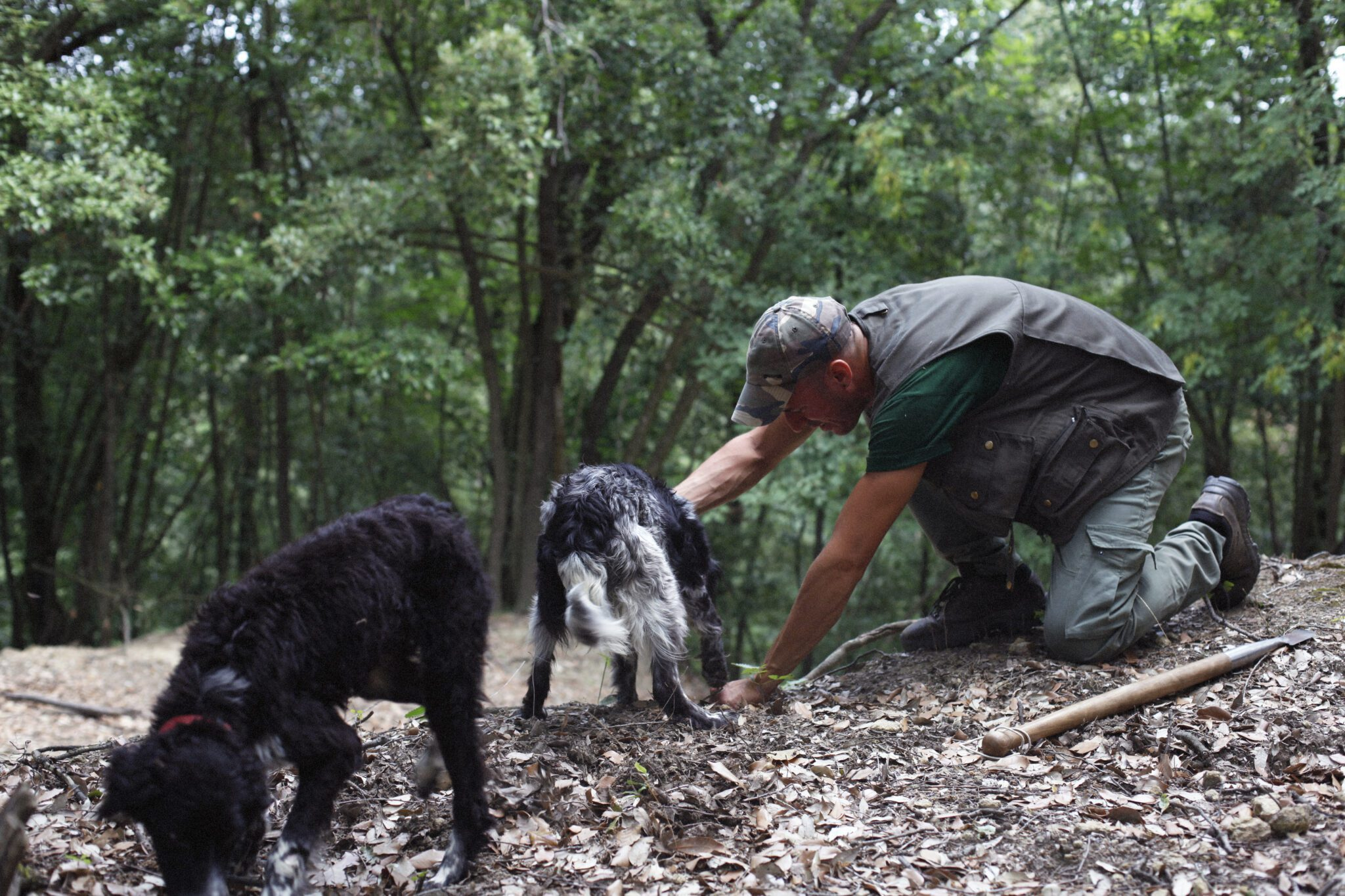Truffle Hunting experience